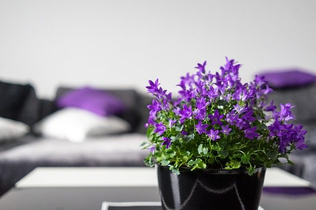 violet-2374509_640